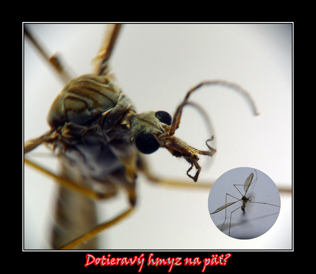 Dotieravý hmyz na päť?