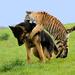 nácvik lovu :)