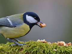 Sýkorka na kŕmitku