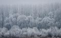 Zima pri Dunaji