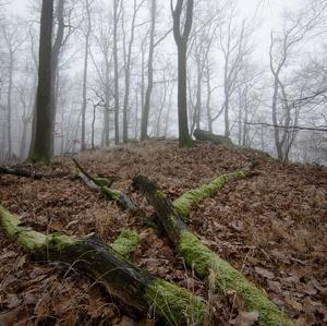 Malokarpatské hmly