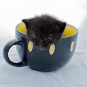 Mačiatko...