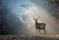 --magic deer--