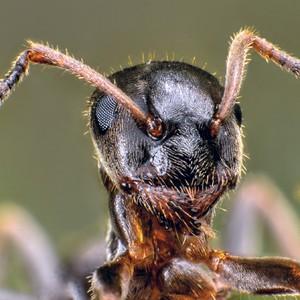 Mravček...