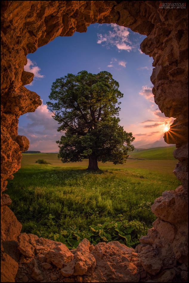 Strom snov