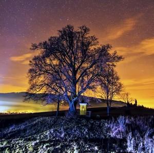 Tree Chapel and stars
