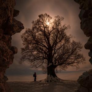Strom života...