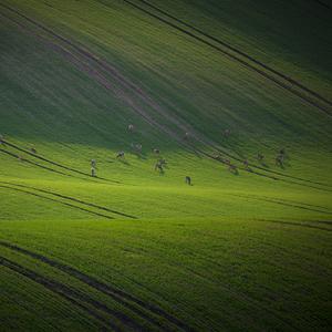 Moravská pastva...