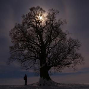 - energy tree -