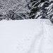 Stopa v snehu