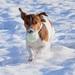 Jackey Terrier :)