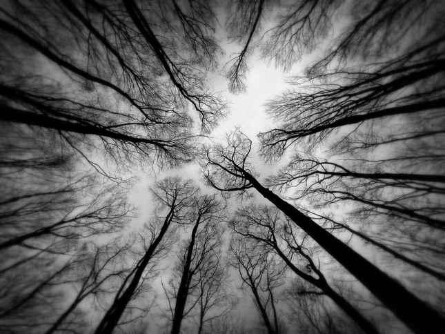 lesní strašiaci :-)