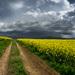 Cesta k búrke