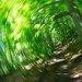 lesný vír
