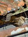 I vrabček sa pýta,kde je jáár:-)