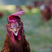 Angry bird :D