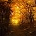 Magická jeseň