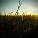 Tráva a východ slnka