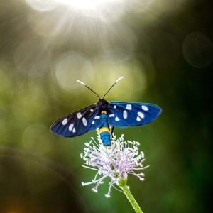 Mariposa 2