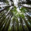 Stromiská