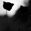 Bezfarebná jar