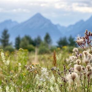Pohľad na Tatry z trávy