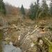 Zabi bobra zachrániš strom