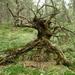 Lesné strašidlo
