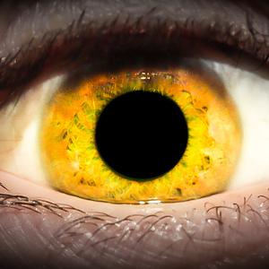 Oko dravca