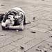 Keď chudoba stretne Paríž