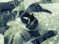 Motýľ.