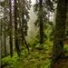 Ukrajinský les