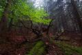 Kráľovstvo lesnej Tarantuly