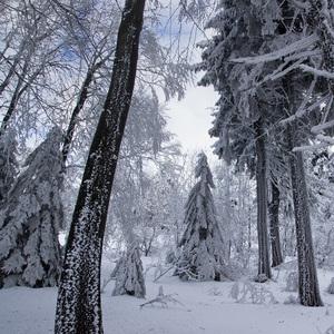 V snežnom kráľovstve