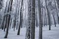 Les v bielom