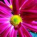 Pohľad do duše kvetu