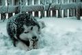 čavo sa nam vyváľal v snehu