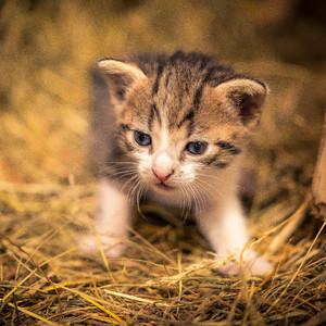 A little cat