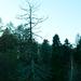 rozpravkovy les
