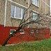 strom na sidlisku