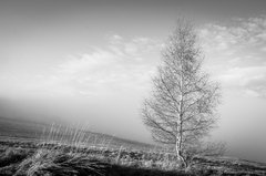 Ciernobiely strom