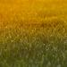 V rannej tráve