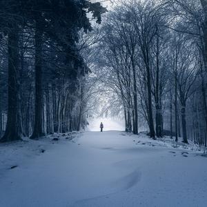 -V objatí tajomného lesa-