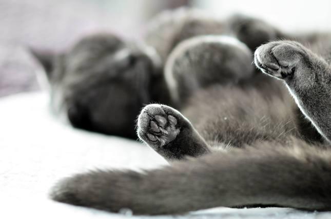 Mačacie leňošenie