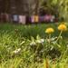 Jarný závan
