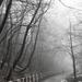 Cesta v hmle
