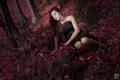 V červenom lese