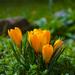 Jarný kvet