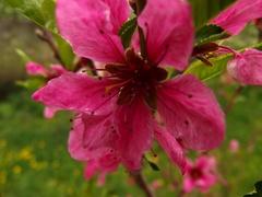 kvet*