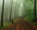Kráčajúc do tajomna...